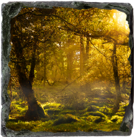 Forest Medium Square Slate AS_21_MSL
